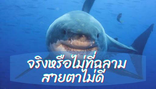 จริงหรือไม่ที่ฉลามสายตาไม่ดี